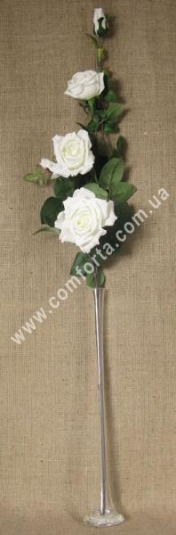 Ветка вьющейся розы