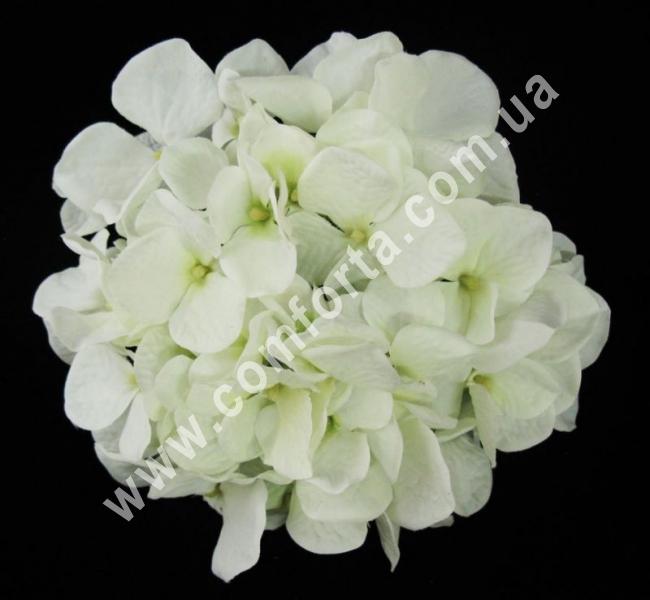 головка гортензии белая, диаметр - 16см, цветок искусственный